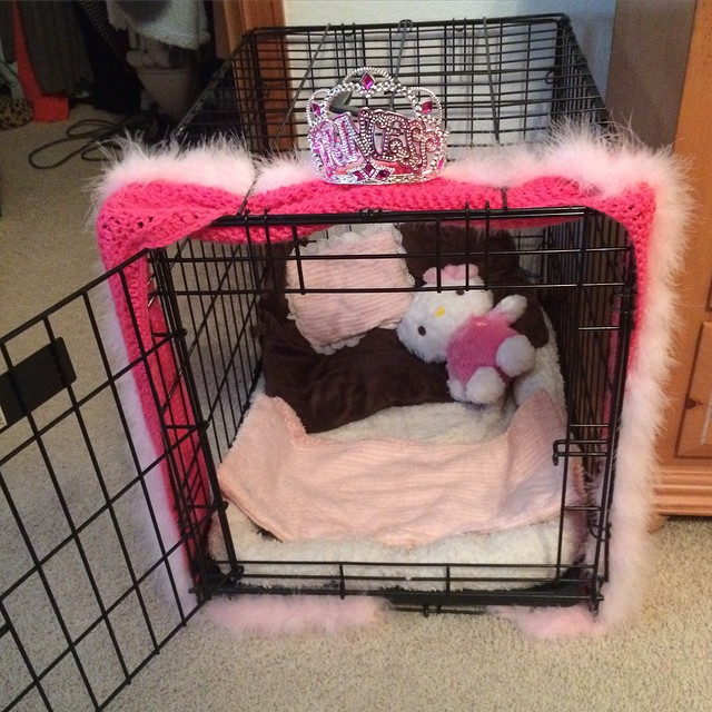 Karli personalized Tori's cage. #spoiledyorkie #bestfriends #dogs