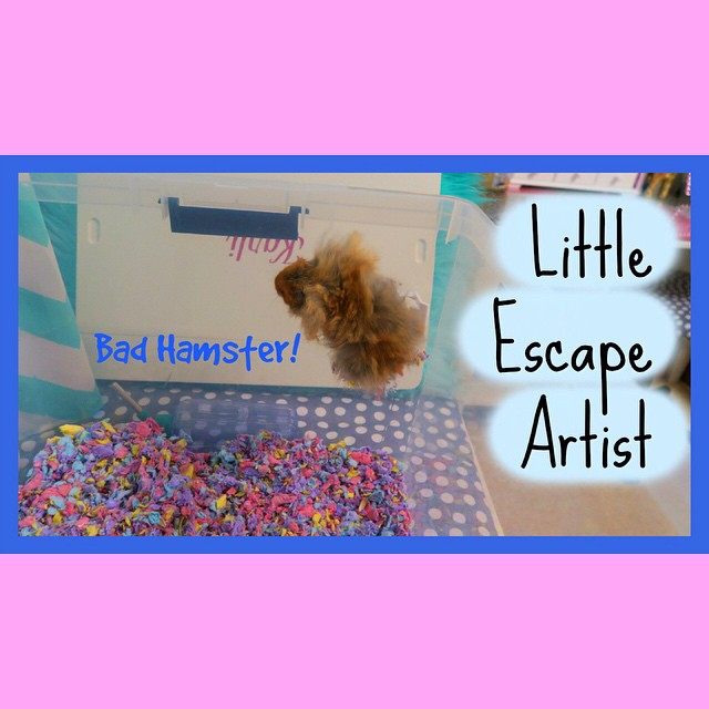 Pipsqueak escaped!! Watch the video!