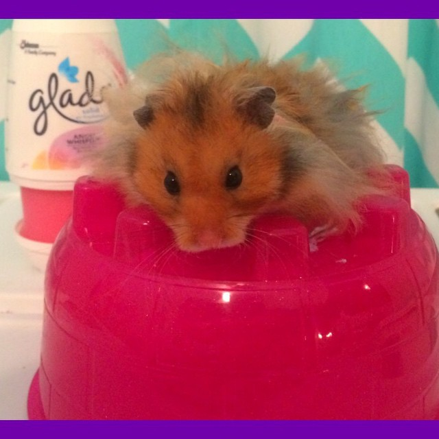 Today's video is up! Poor Stinky Hamster!!
